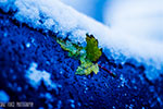 Versher_Leaves in Winter