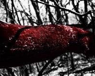 Pesick_Bleeding Moss
