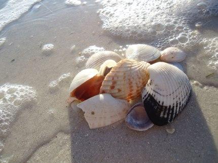 Baron_Seashells